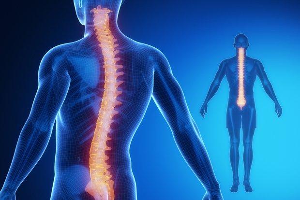Highlighted spine x-ray iData